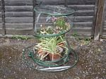 Garden Cloches Mini Greenhouses. picture click to read more