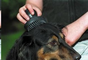 Pet Brush picture