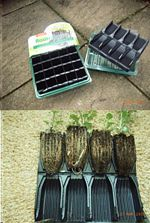 Roottrainer (40 cells. 2 Trays. 2 Covers. Rootballs to you.) picture click to read more